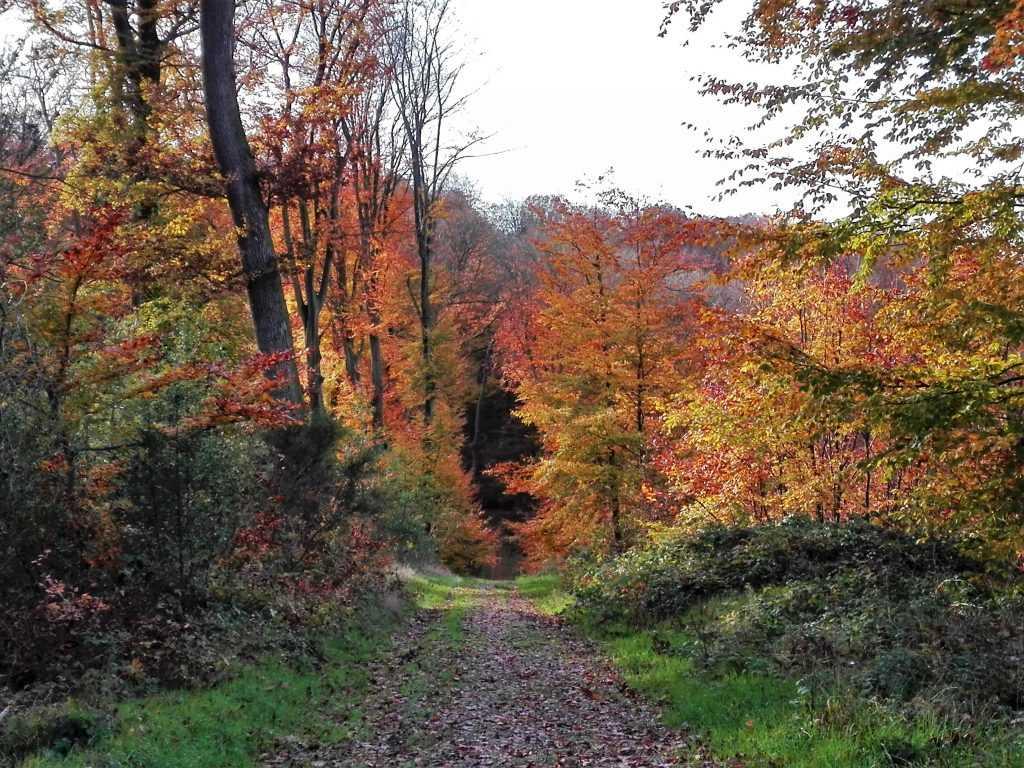 L'autome en forêt de Lyons © Reine Liseicki Lyons Andelle Tourisme