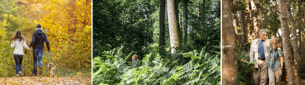 Balade en amoureux en forêt de Lyons